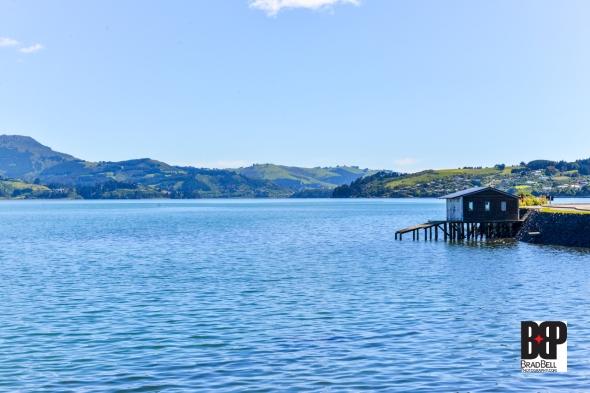 New Zealand-©Brad-Bell-Photography.jpg-9844
