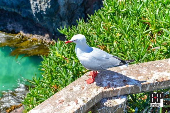 New Zealand-©Brad-Bell-Photography.jpg-9880