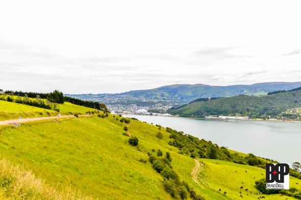 New Zealand-©Brad-Bell-Photography.jpg-9927